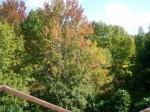 2012-10-29_121705.jpg